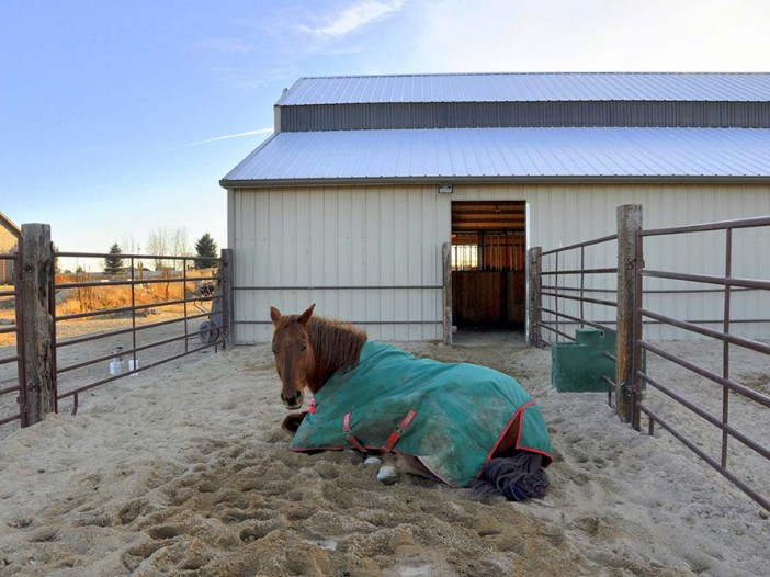 Horse in pen with mud-free footing.