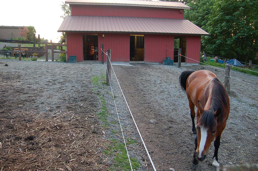 Stall with paddock footing and gutter downspouts.