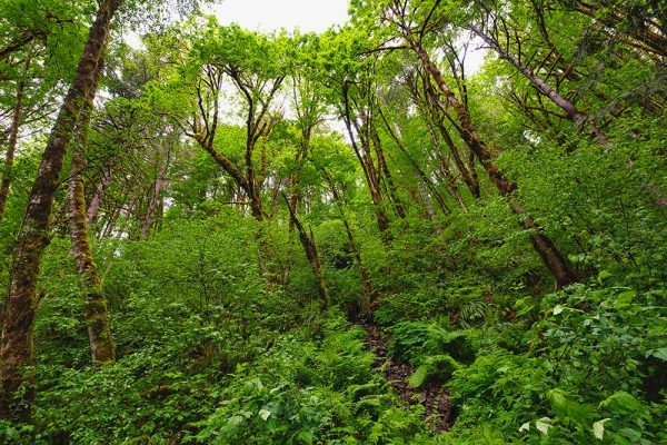 Over 50% of the land in Washington County is lush forest.