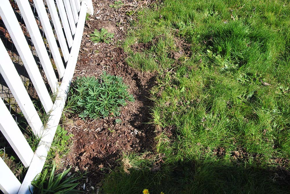 Photo of grass dug out around plant