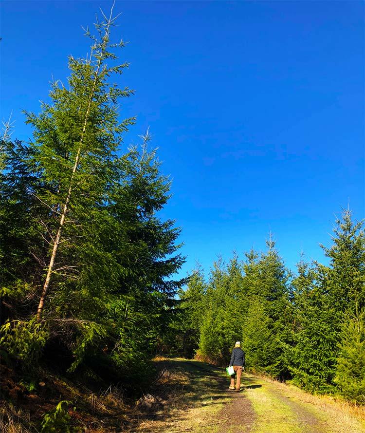 Brandy Saffell inspects a stand of Douglas fir.