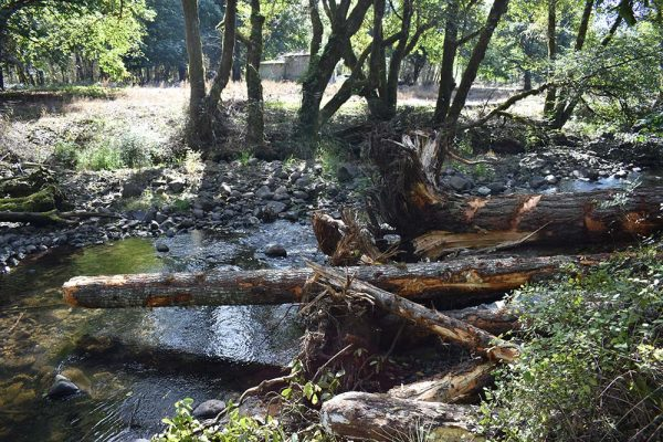 Placed wood helps water move into historic side channels to create refugia for salmon.