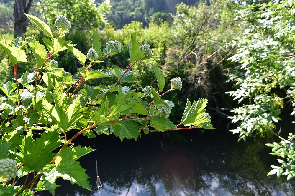 Stream With Vegetation