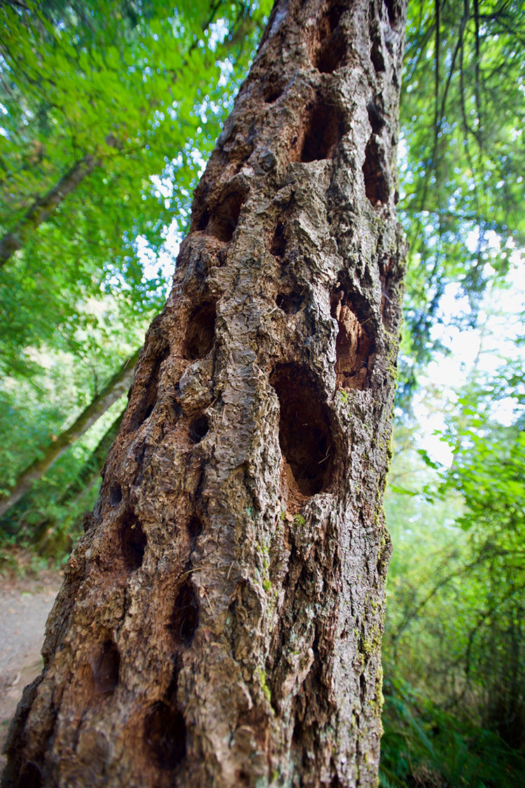 Tree Trunk With Holes