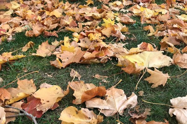 Leaves on the grass.