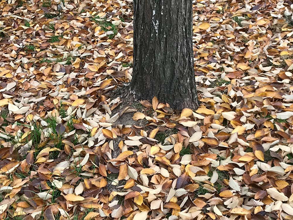 Leaves on ground around tree.