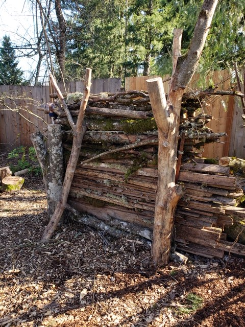 Logs in a Backyard Habitat