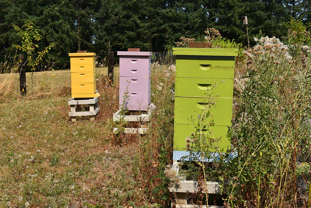 Falconer honey bee hives in a field painted yellow, lavender and lime green