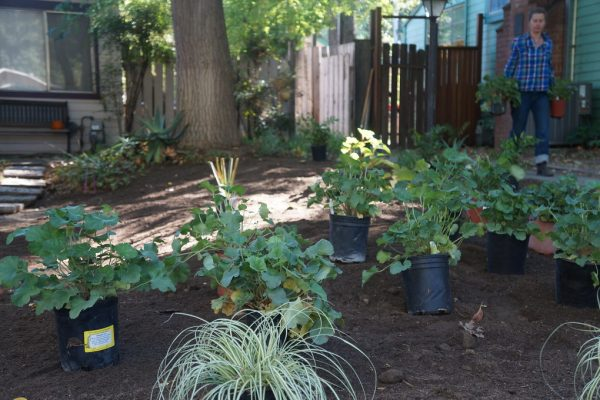 Container plants set out on a yard with woman walking in background