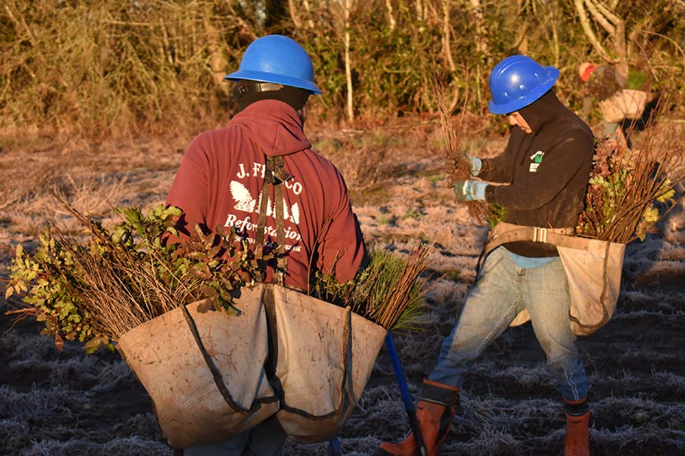 Two workers gathering plants.