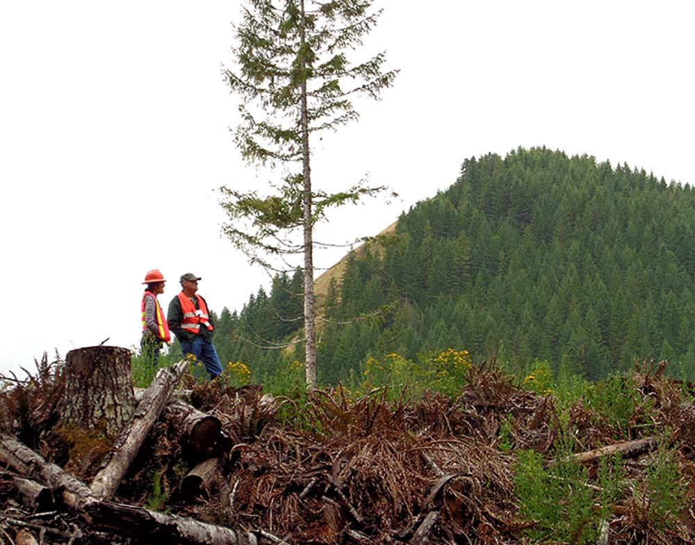 Two people in forest with cut trees.