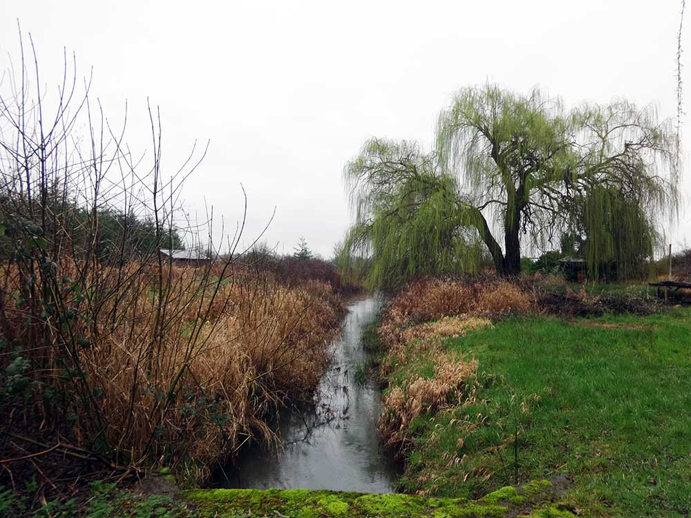 Invasive plants crowding the stream Glencoe Swale