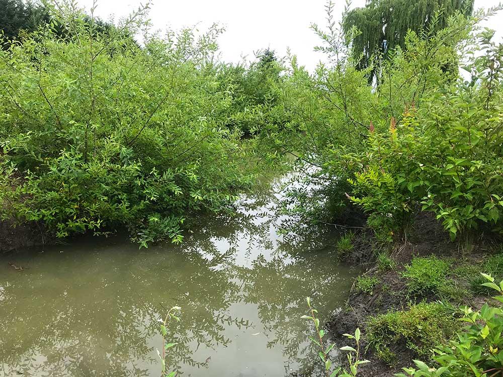 Green plants alongside Glencoe Swale After Photo