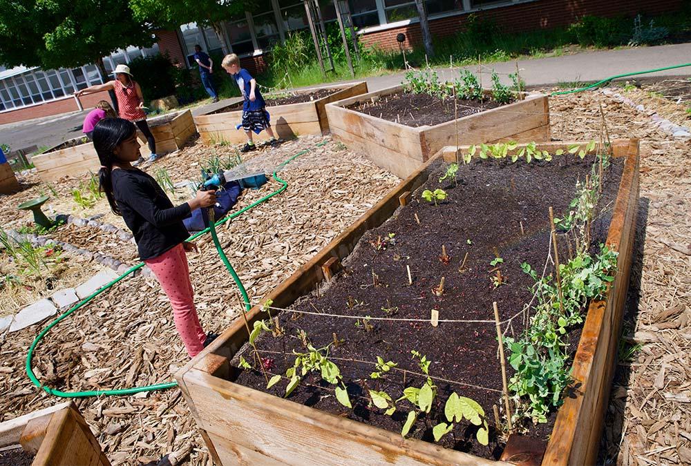 Child watering garden.
