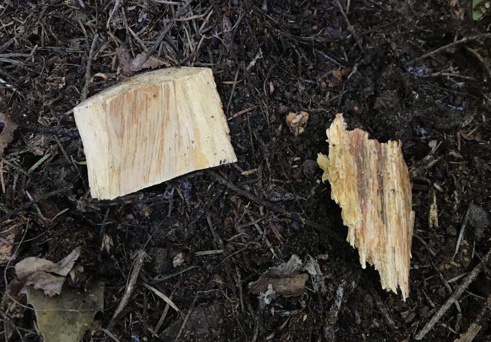 LRD Healthy VS Diseased Root Pieces