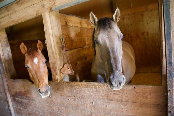 Two horses in stables at the Roth Property