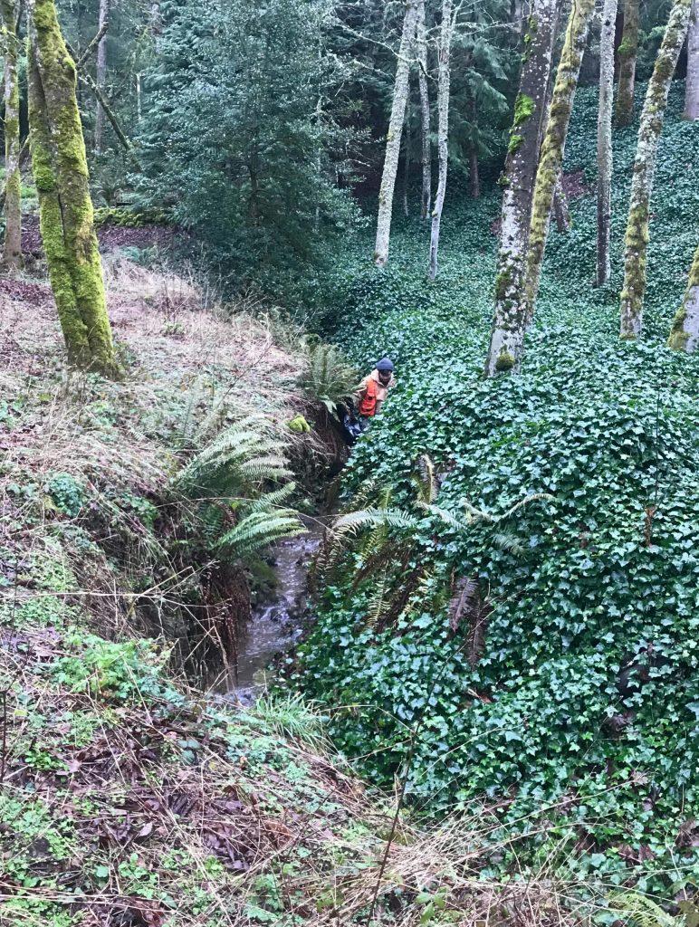 Person surveying a creek for garlic mustard
