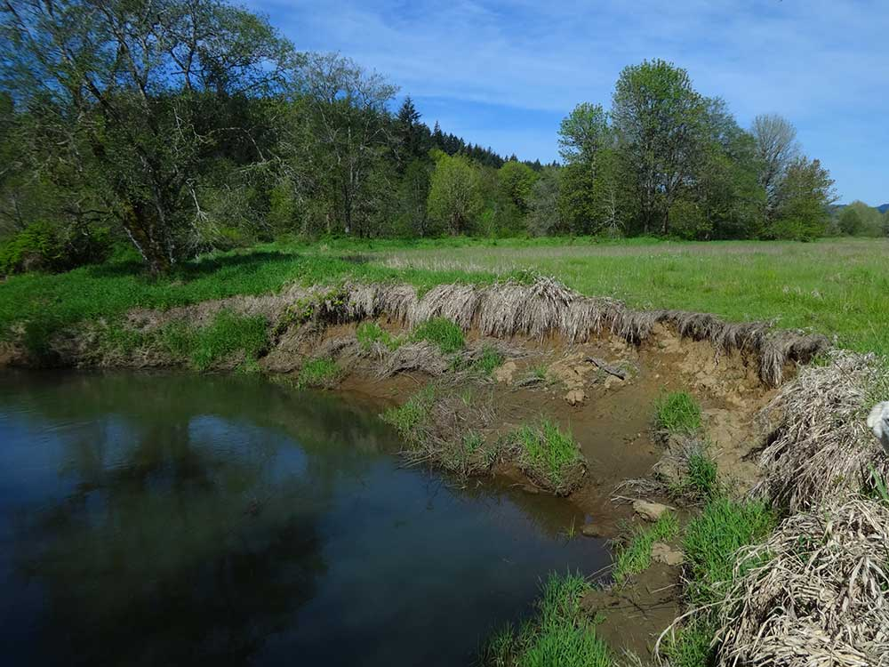 A section of West Fork Dairy Creek is suffering from erosion.