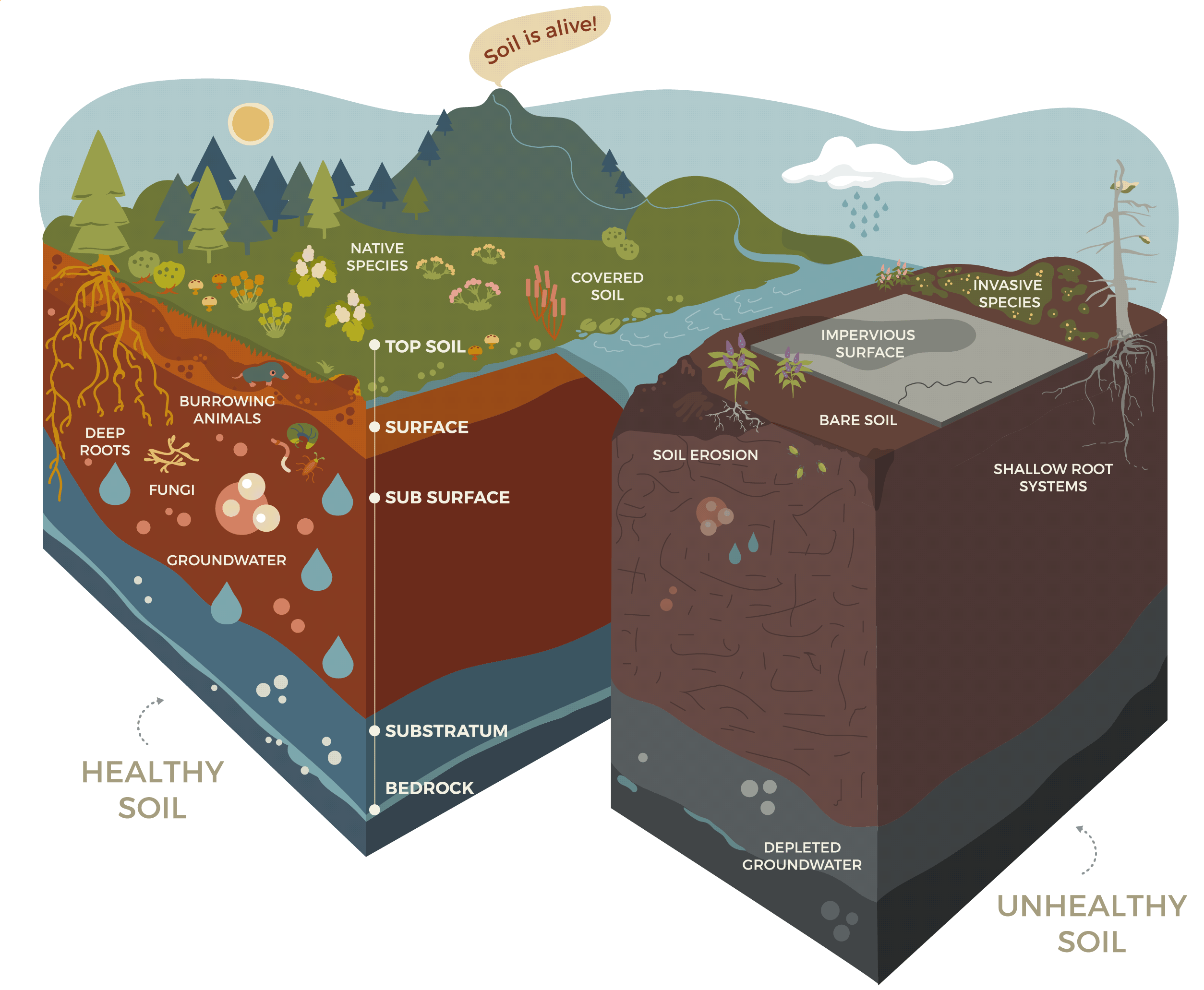 Healthy vs Unhealthy Soil Infographic. Soil is Alive!