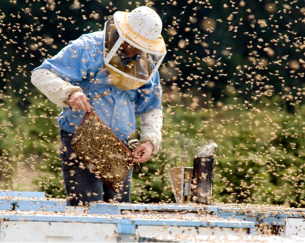 Beekeeper tending bee hive
