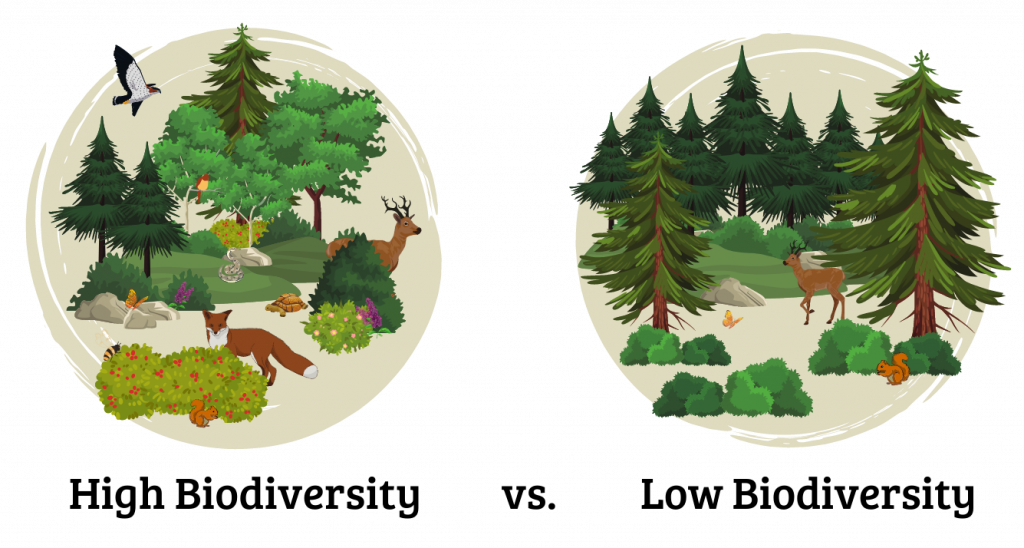 This graphic compares an ecosystem with high biodiversity and an ecosystem with low biodiversity.  The circle on the left features a fox, deer, raptor, snake, pollinators, and many types of trees, flowers, and shrubs. This is high biodiversity.  The circle on the right features a deer, squirrel, butterfly, and two types of trees. This ecosystem has low biodiversity.
