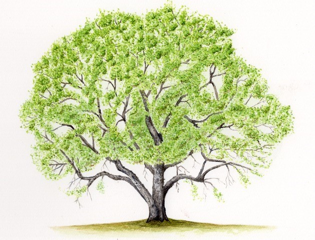 A single oak tree can support many types of plants and animals.