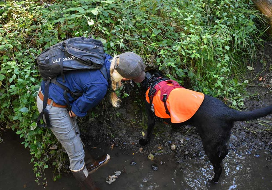 Conservation canine and handler looking for invasive species