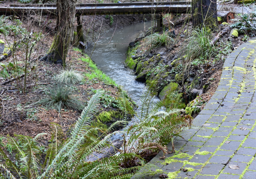 backyard garden with creek running through.